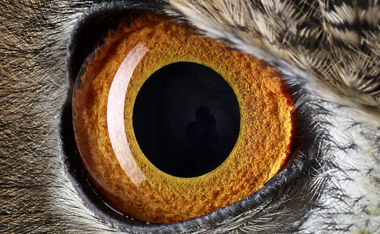 Can You Guess The Wild Faces Behind These Animal Eyes? | World Science Festival