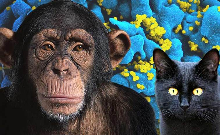 Might the Keys to an AIDS Cure Be Found in Monkeys or Cats? – World Science Festival