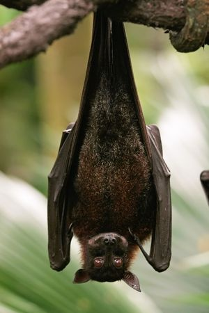 Why don't bats get dizzy?