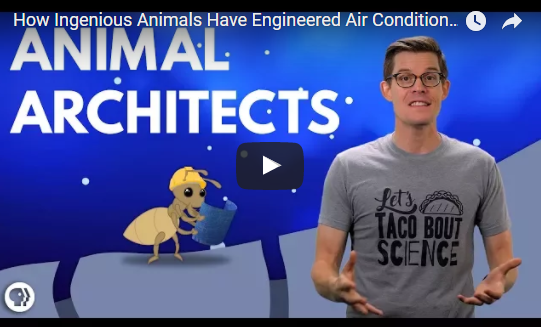 How Ingenious Animals Have Engineered Air Conditioning