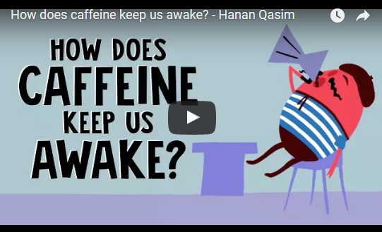 How does caffeine keep us awake? – Hanan Qasim TED-Ed