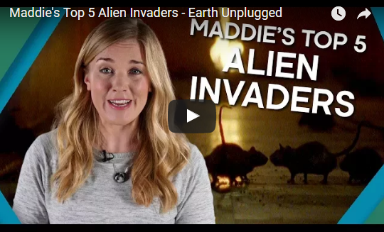 Maddie's Top 5 Alien Invaders – Earth Unplugged