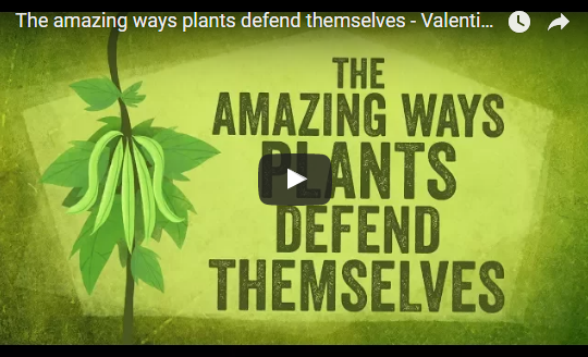The amazing ways plants defend themselves – Valentin Hammoudi