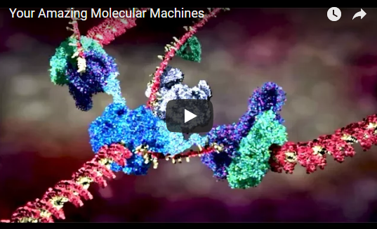Your Amazing Molecular Machines – Veritasium
