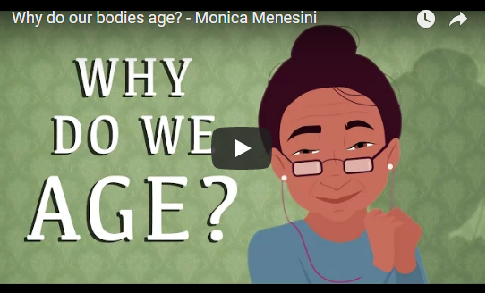 Why do our bodies age? – TED- Ed