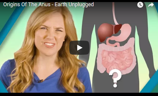 Origins Of The Anus – Earth Unplugged