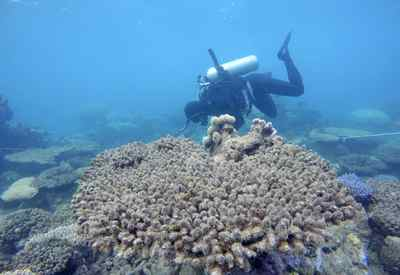 Coral reefs around globe being pummelled by climate change: study – Globe and Mail