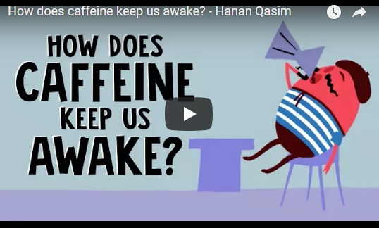 How does caffeine keep us awake? – Hanan Qasim, TED-Ed