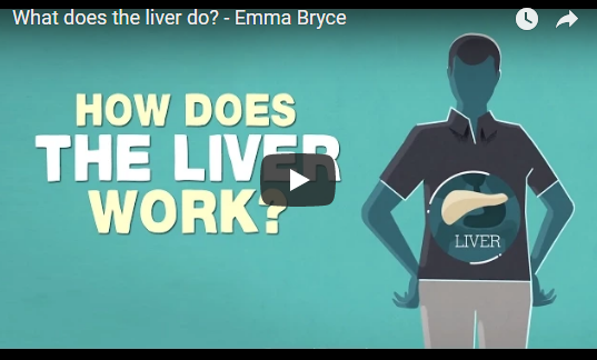 What does the liver do? – Emma Bryce