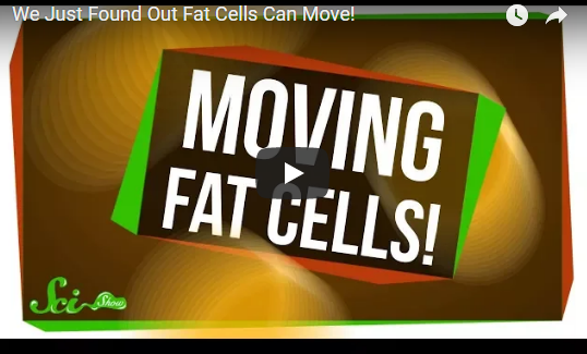 We Just Found Out Fat Cells Can Move!