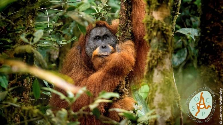 Top 10 new species of 2018 include volcanic bacterium and a hitchhiking beetle | CBC News