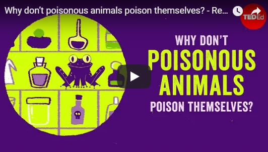 Why don't poisonous animals poison themselves? – TED Ed by Rebecca D. Tarvin
