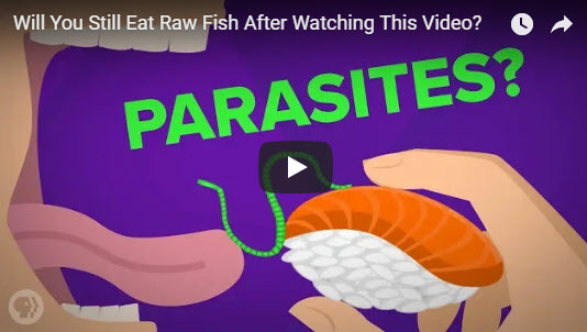 Will You Still Eat Raw Fish After Watching This Video?
