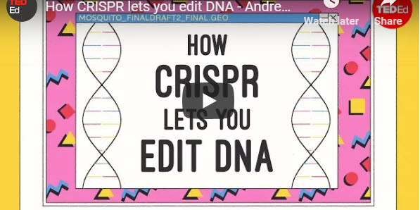 How CRISPR lets you edit DNA – TED Talk by Andrea M. Henle