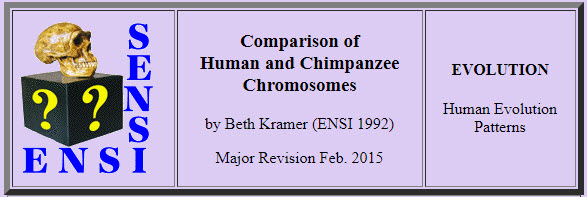 Comparative Chromosomes – submitted by Laura Wodlinger