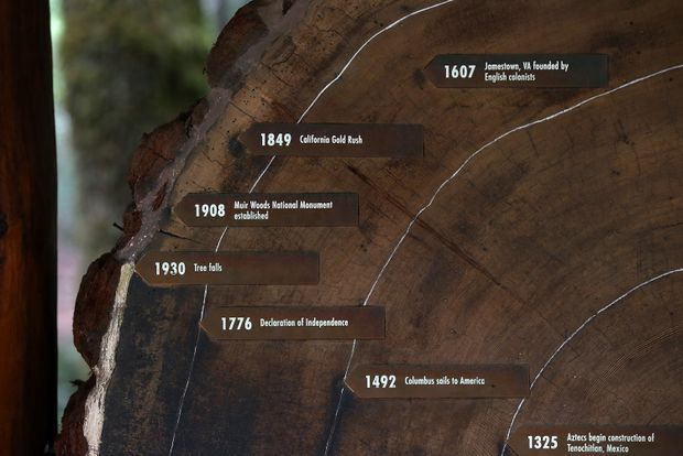 Tree rings show human effect on climate goes back more than a century – The Globe and Mail