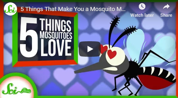 5 Things That Make You a Mosquito Magnet – YouTube