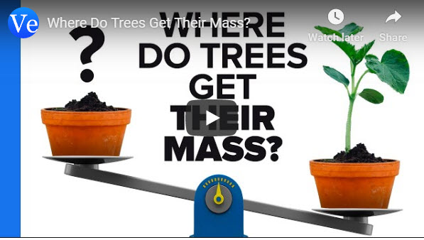 Where Do Trees Get Their Mass? – Veritassium