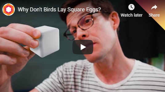 Why Don't Birds Lay Square Eggs?